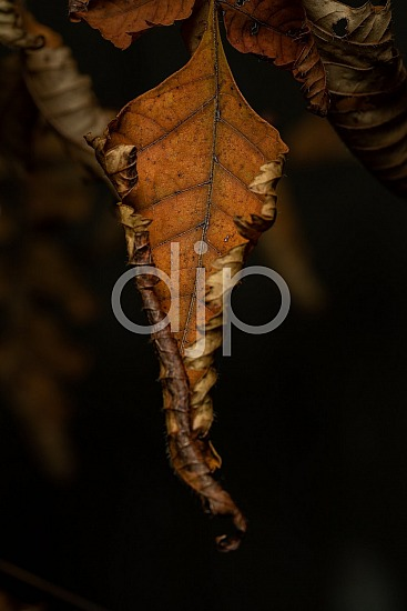 D Jones Photography, Sugar Land, brown, djonesphoto, excursions with djp, leaf, macro, personal, quarantine, Borden Street