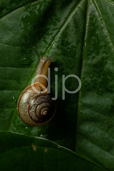 Borden Street, D Jones Photography, Sugar Land, brown, djonesphoto, excursions with djp, macro, personal, quarantine, snail, yellow, black