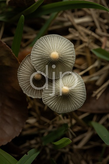 D Jones Photography, Sugar Land, djonesphoto, excursions with djp, fungi, macro, mushrooms, personal, quarantine, white, yellow, Borden Street