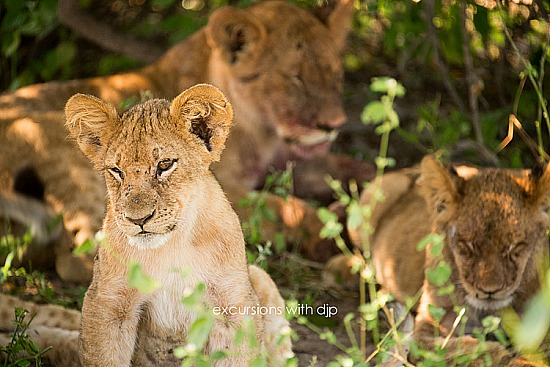 African Photographic Safari
